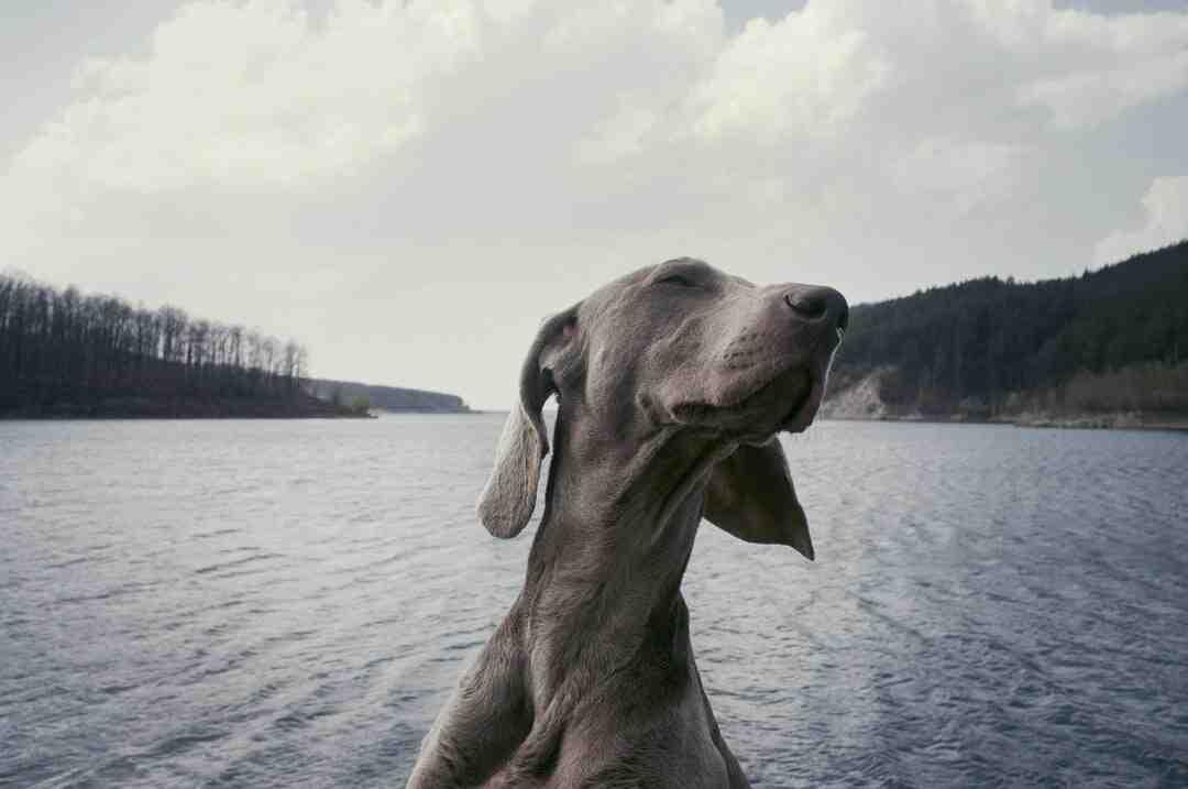 Comment un chien reconnait son maître